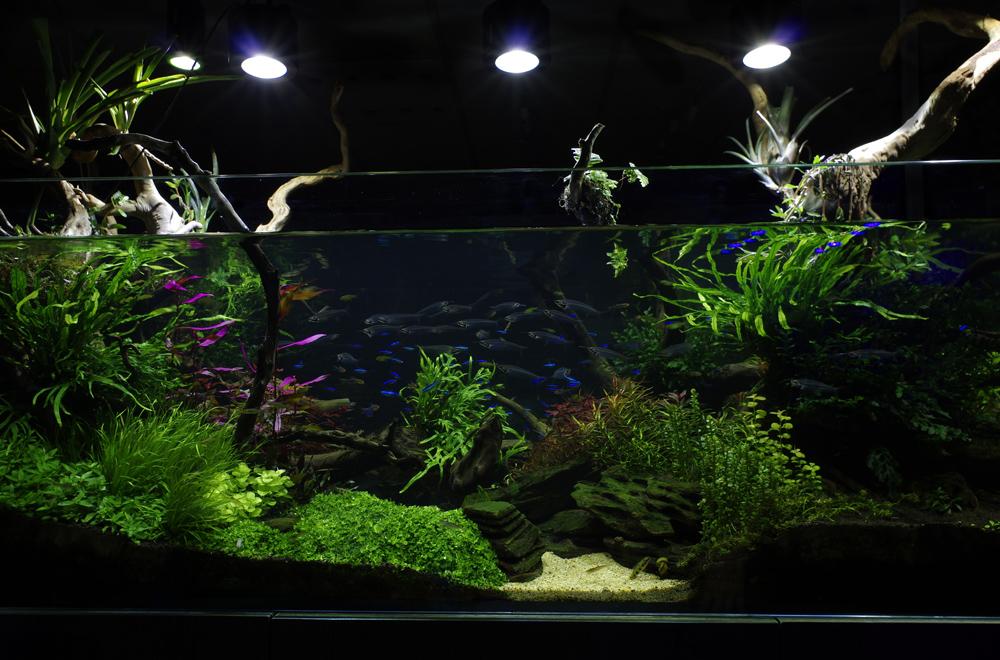 planted-tank-aquatic-design-specialist-london-centre_2017516a