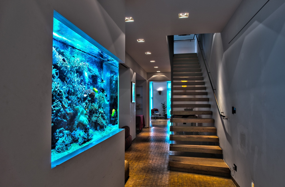 Residential Home Wall Insert Aquarium