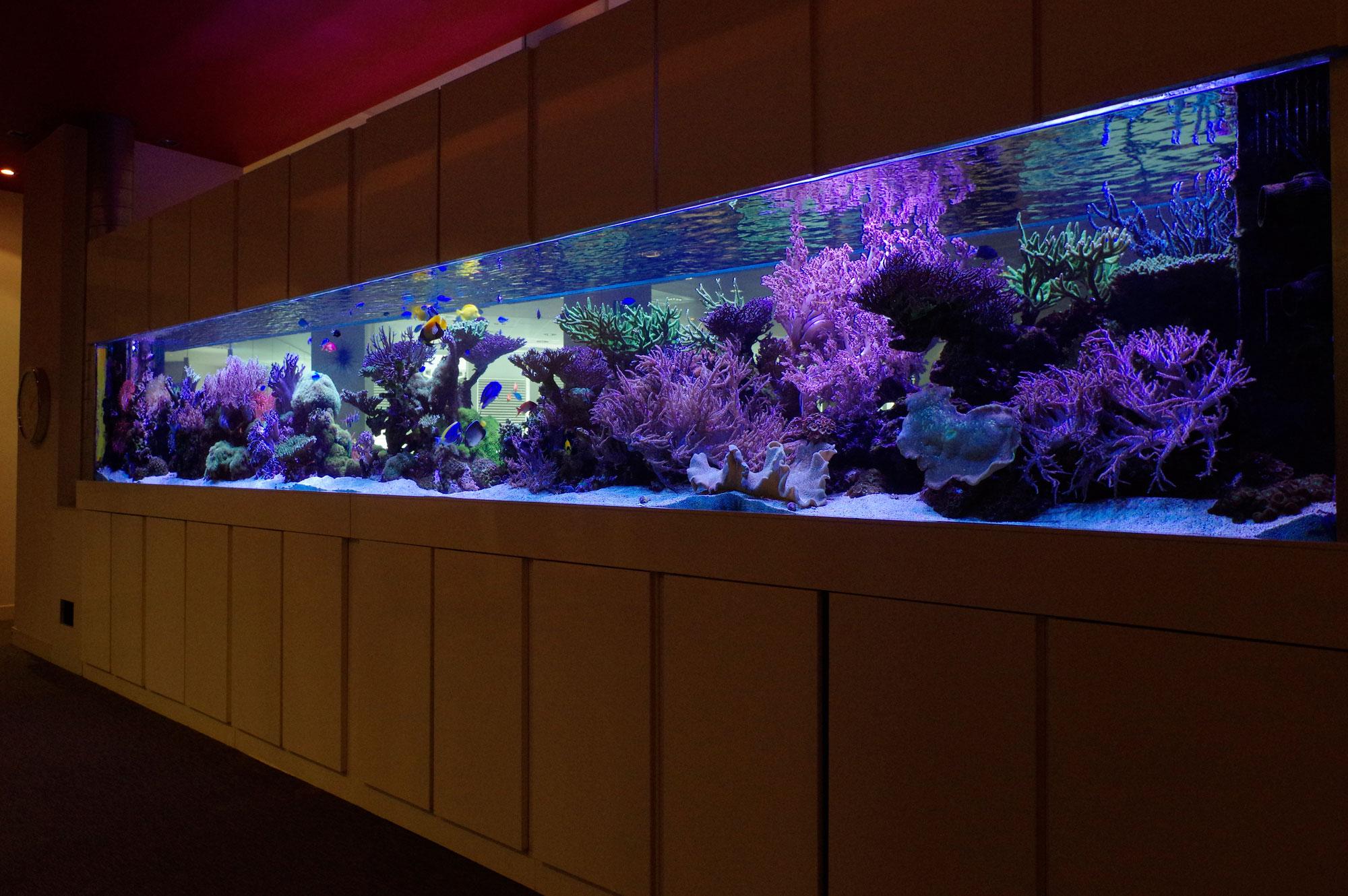 Aquarium d interieur design ils donneront votre intrieur for Aquarium interieur