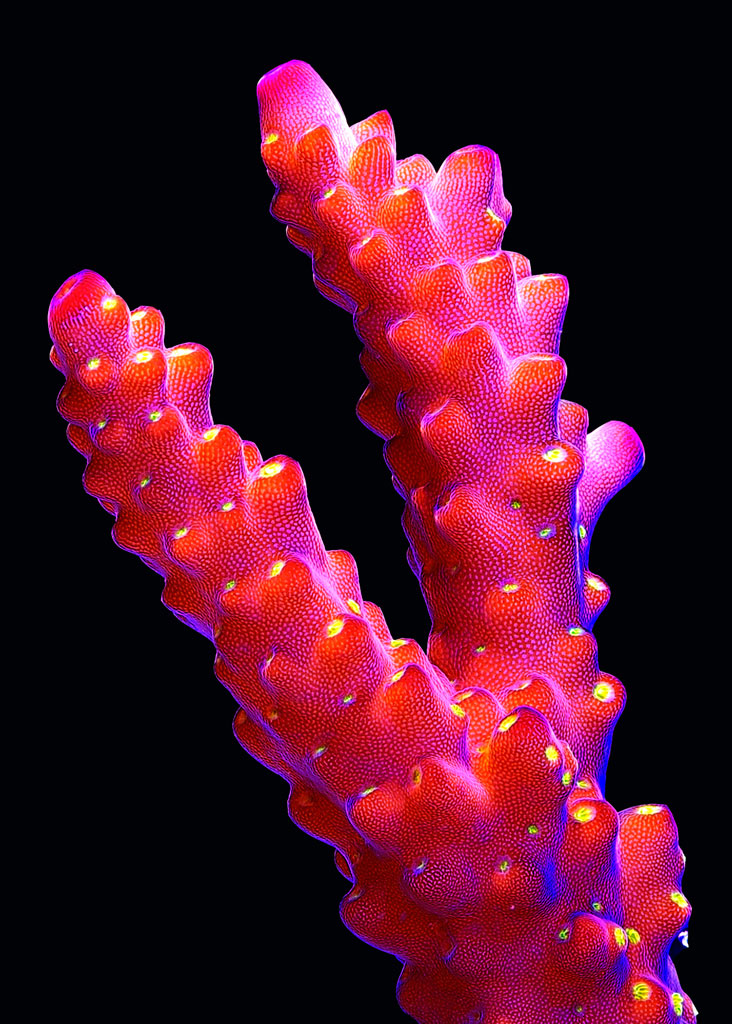 coral-frags-aquatic-design-centre