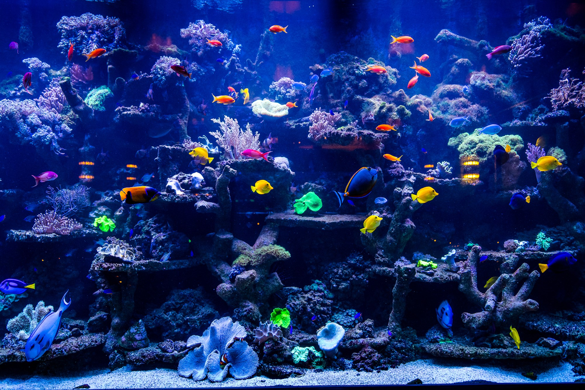 Coral Reef Systems