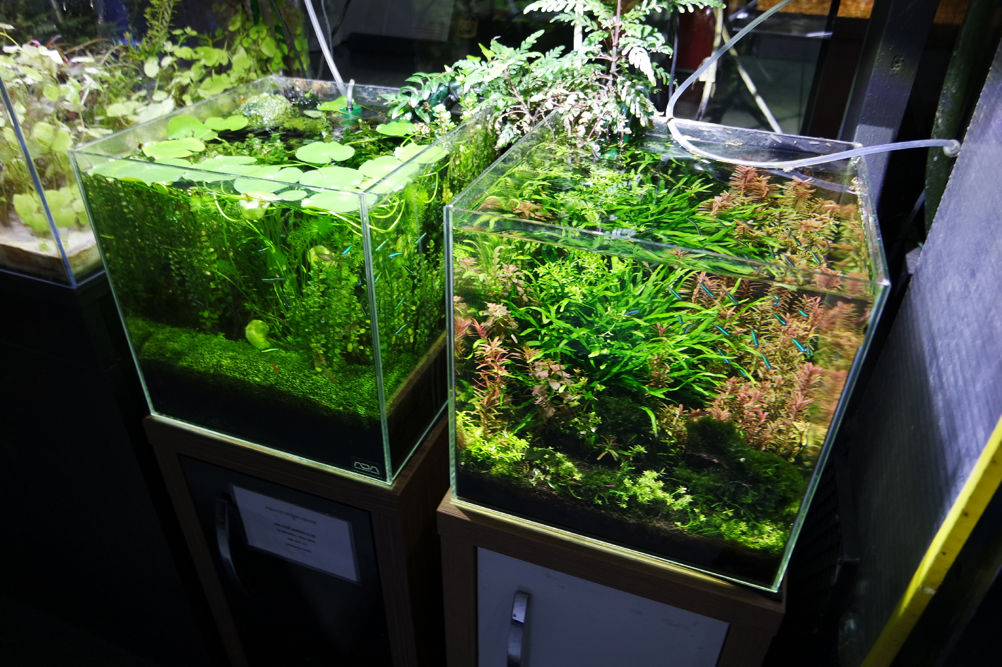 Aquascaper-tank-showroom-05