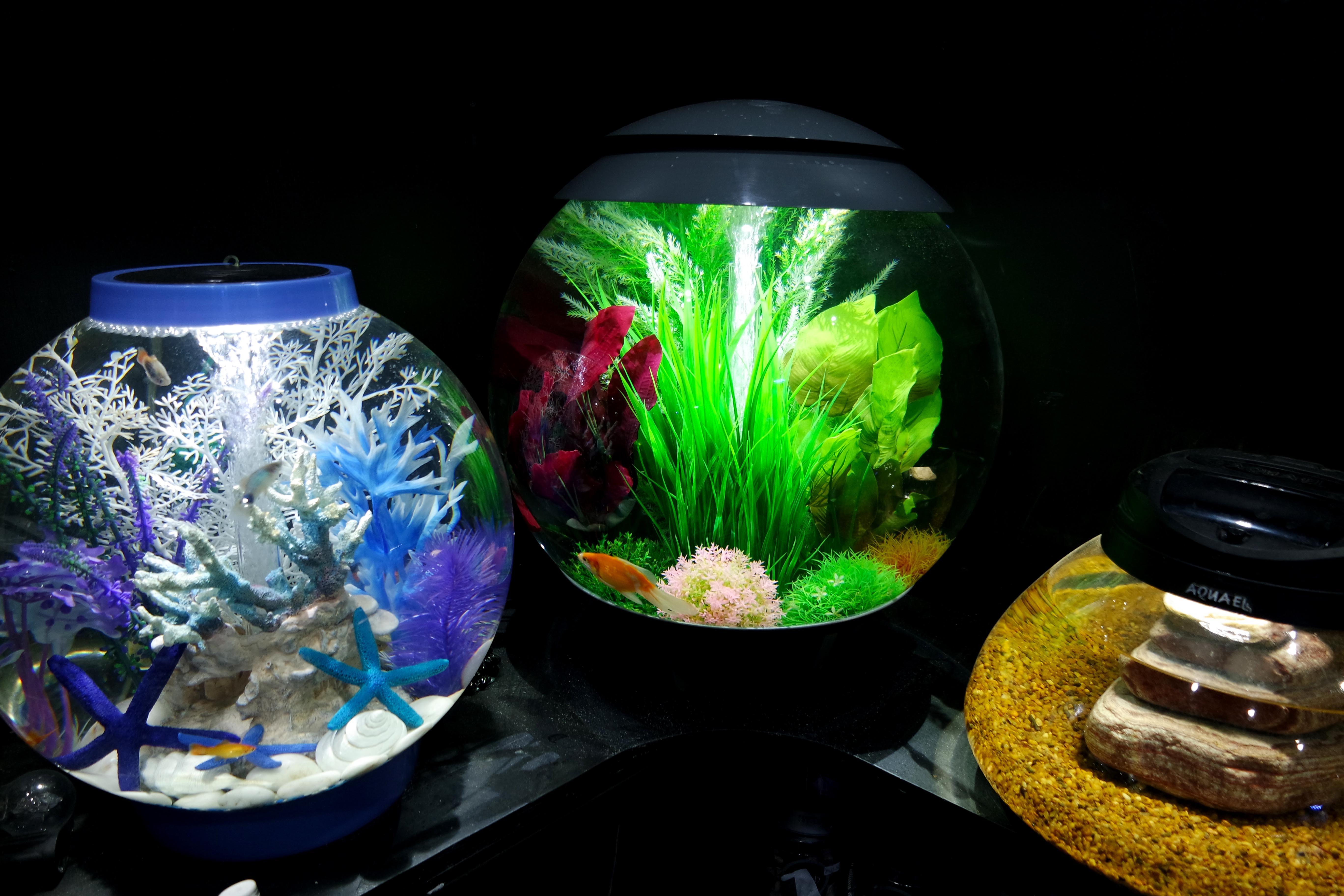 BiOrb Bowls