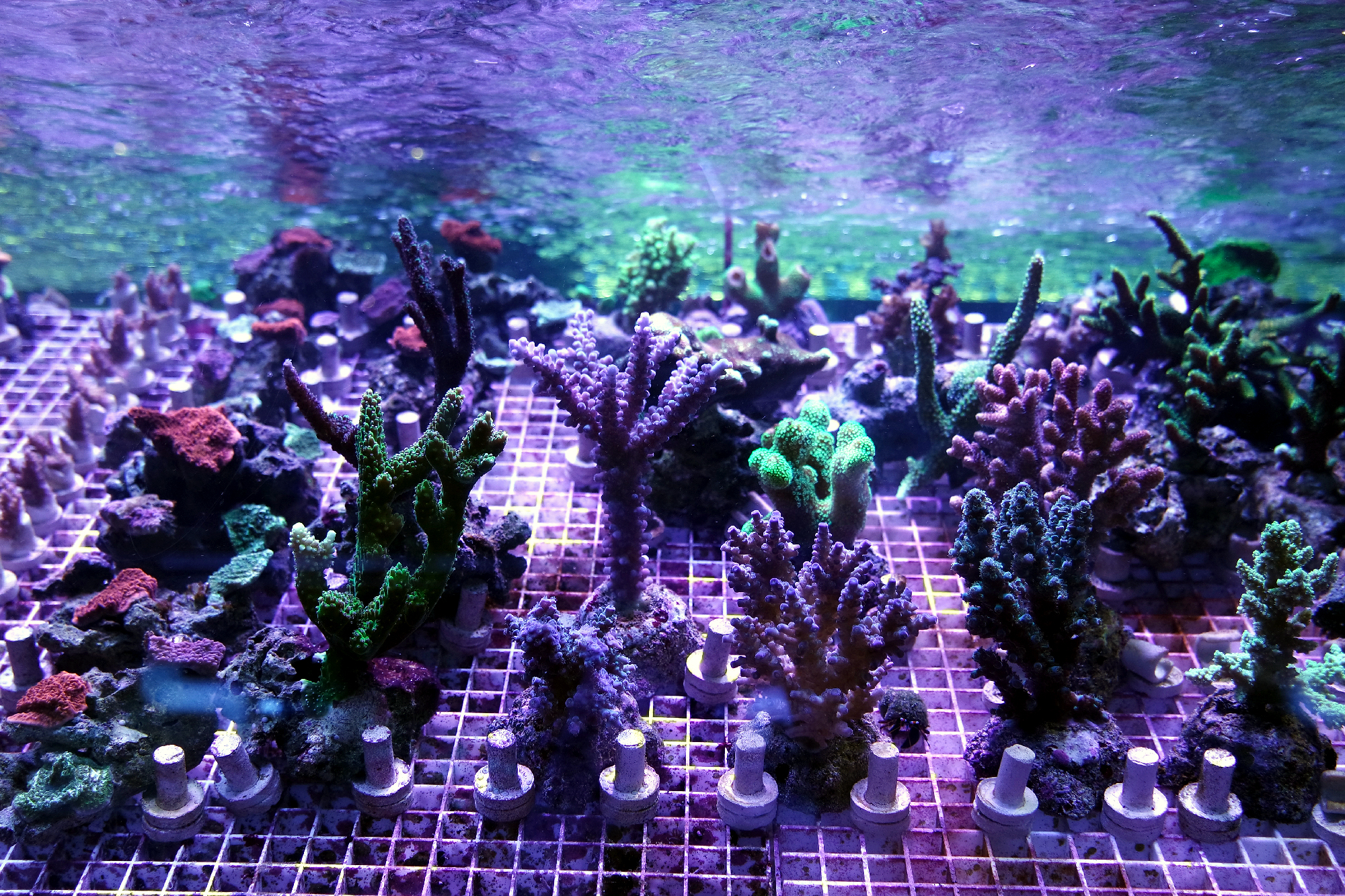 Coral-Frags-1160429
