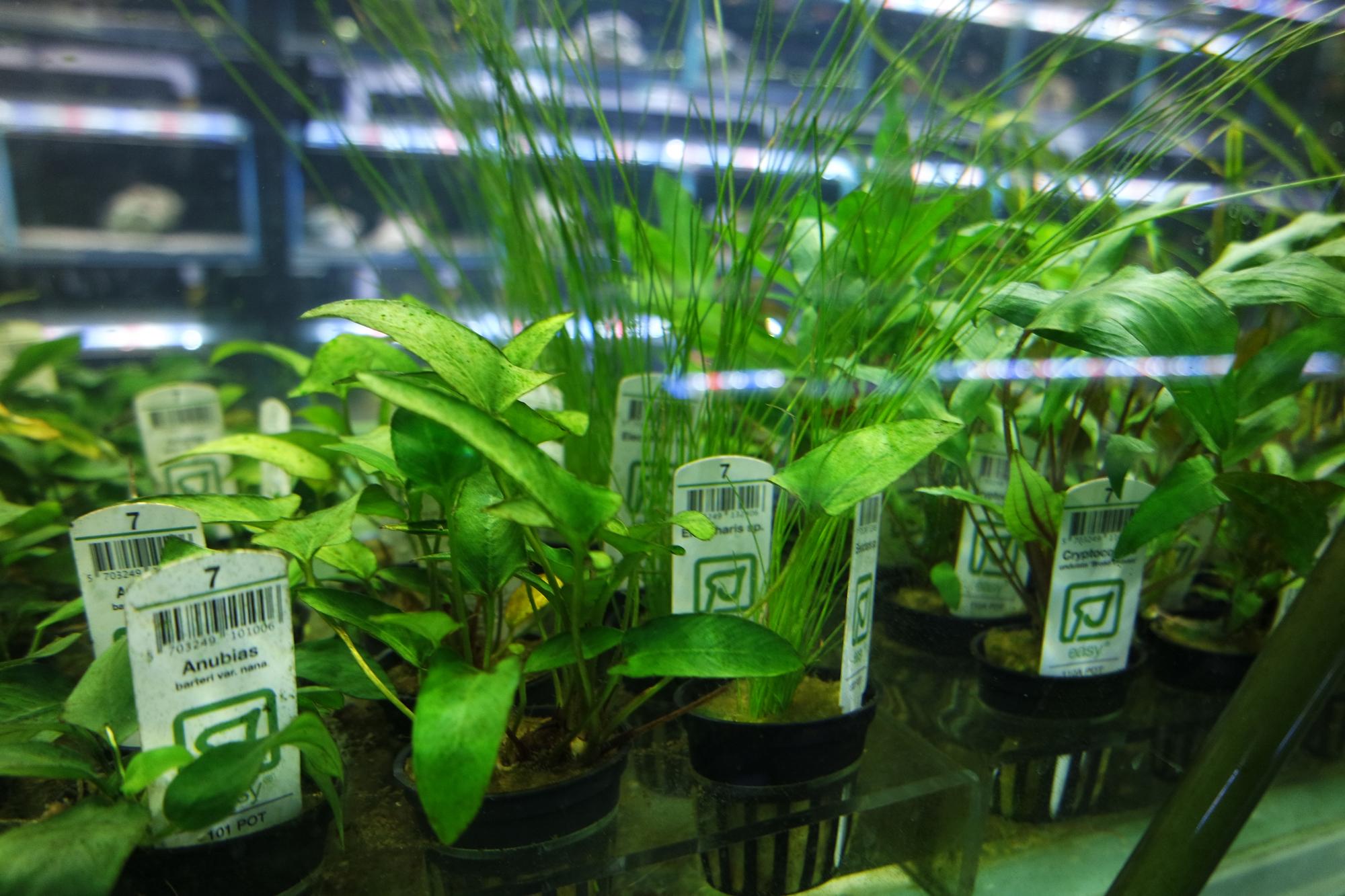 plant-section-shop-001