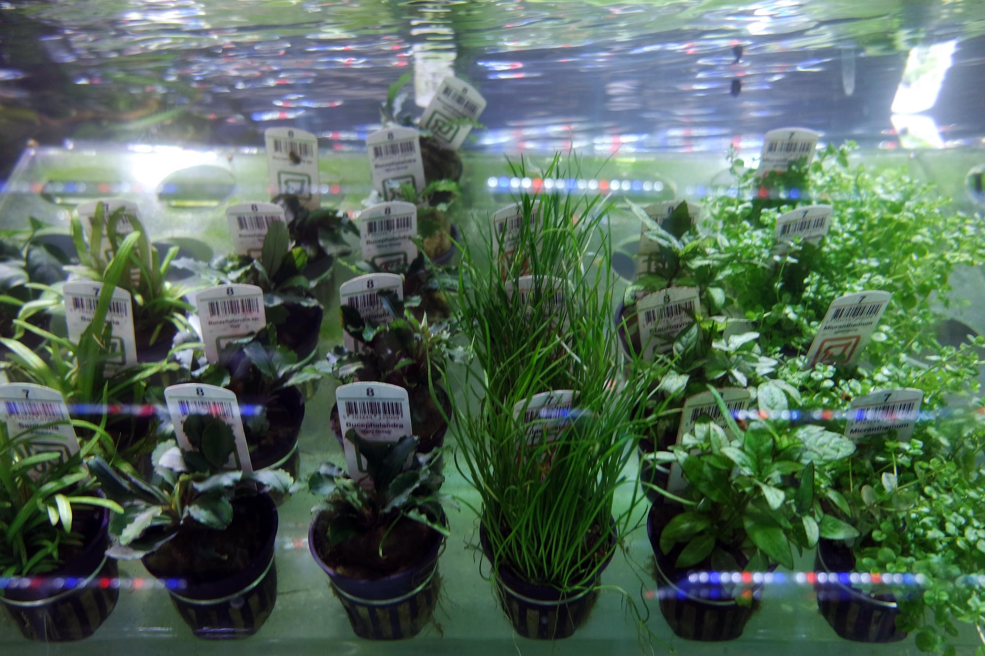 plant-section-shop-002