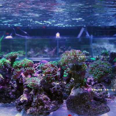 Coral-Frags-1160431