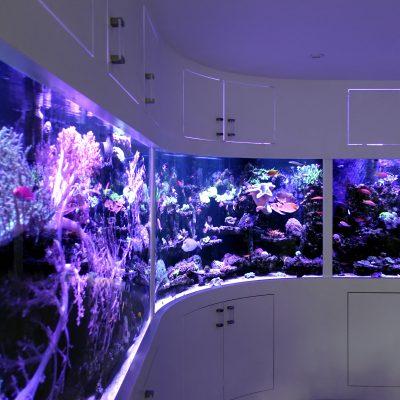 Ultimate_Reef_Aquarium_332