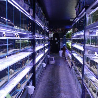 inside-our-shop-001