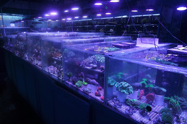 London Aquatic Shop for Aquariums / Fish Tanks, Marine ...