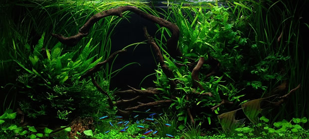 Planted Freshwater