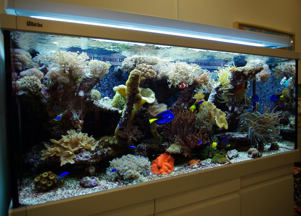 Free Standing Reef Tank