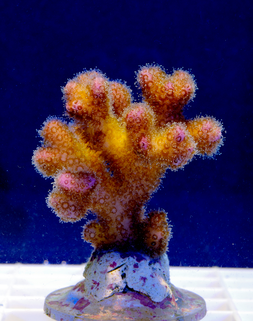 Coral-Frags-021