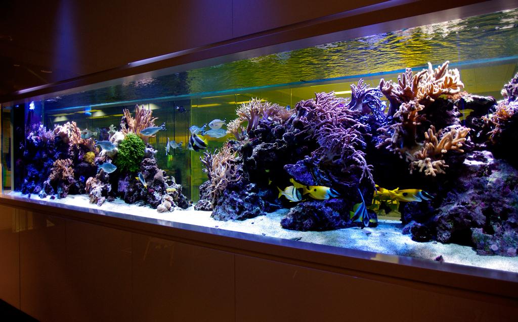 Massive Reef Tank