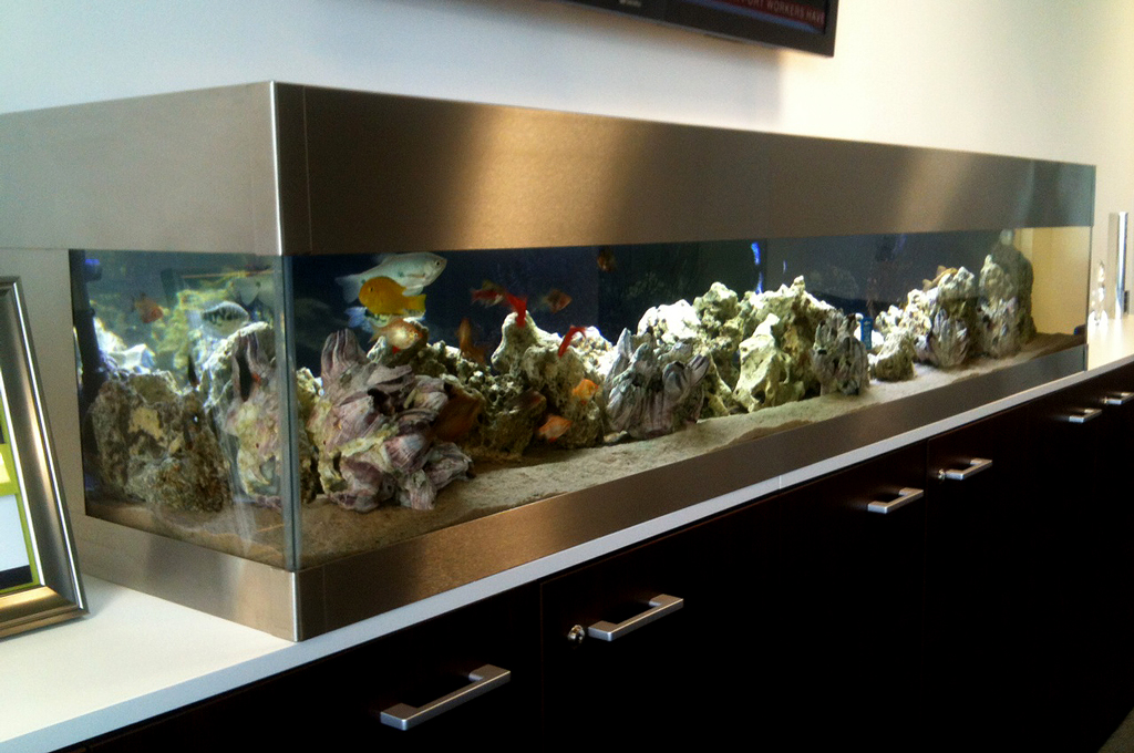Kitchen Top Aquariums