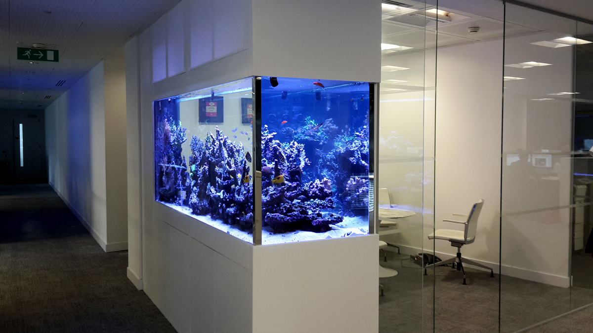 Office Space Fish Tank