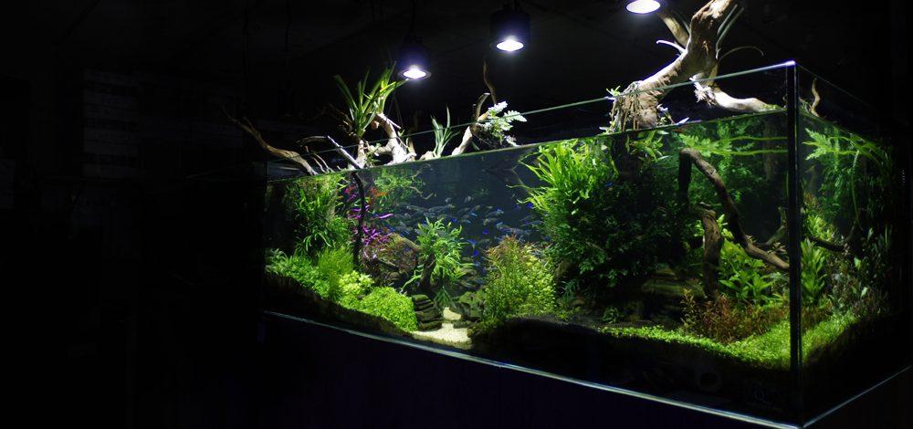 Designer Aquarium Installation