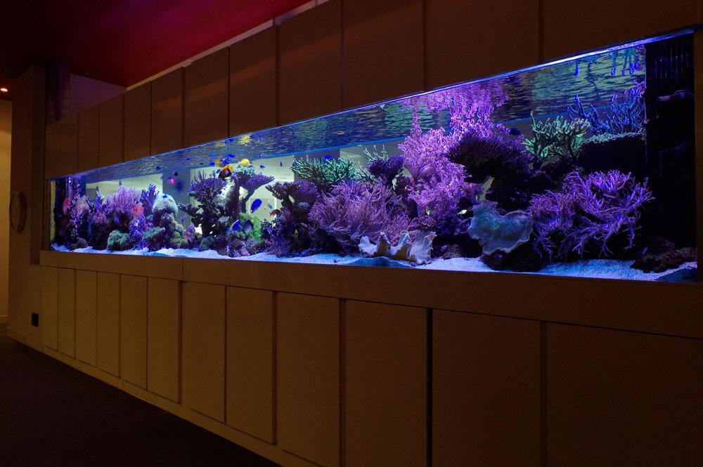 Very Large Coral Reef