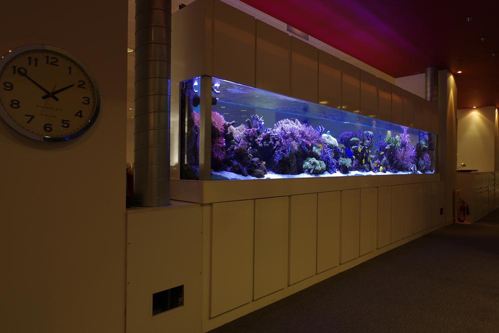 Large Bespoke Marine Reef Tank