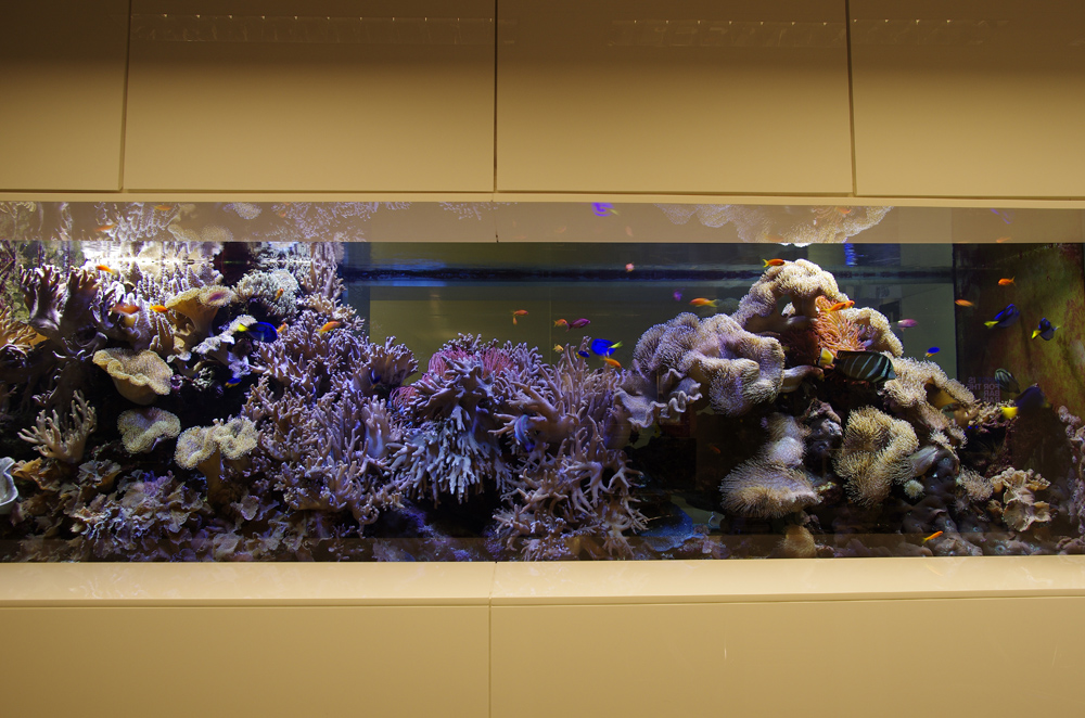 Large Reef Tank