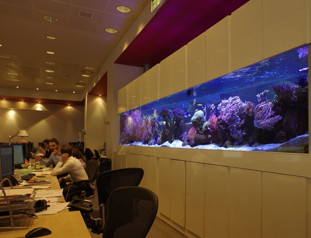 Work Place Aquariums