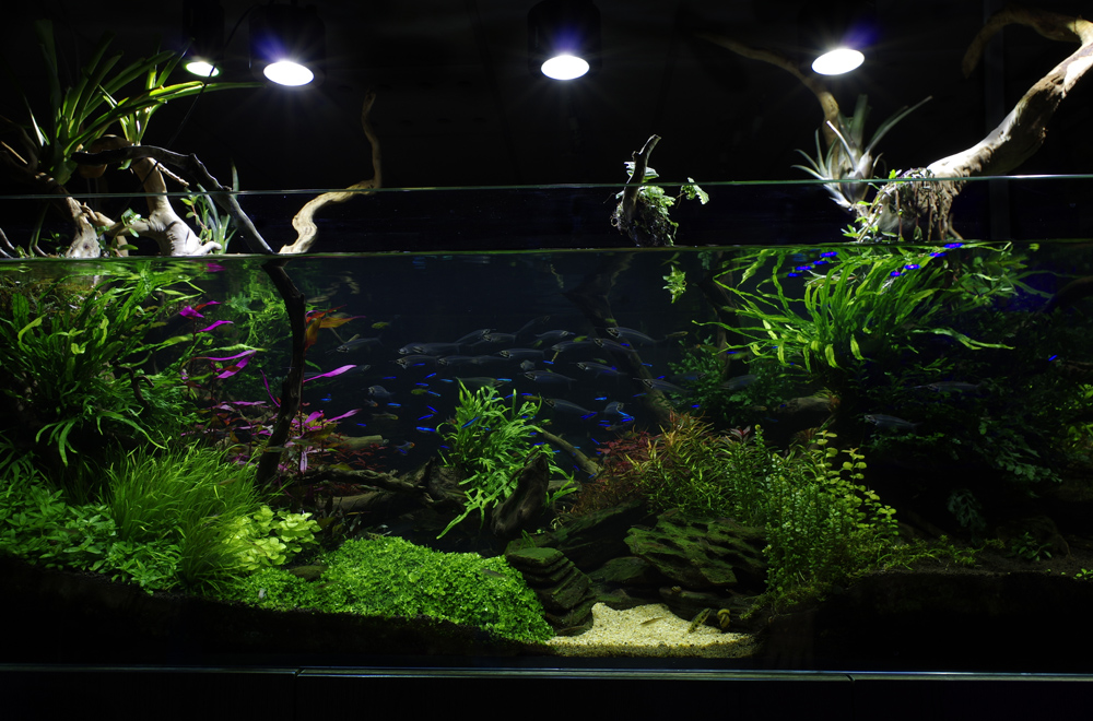 planted-tank-aquatic-design-specialist-london-centre_2017516a