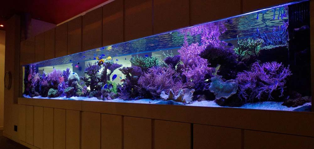 London Aquarium Installations