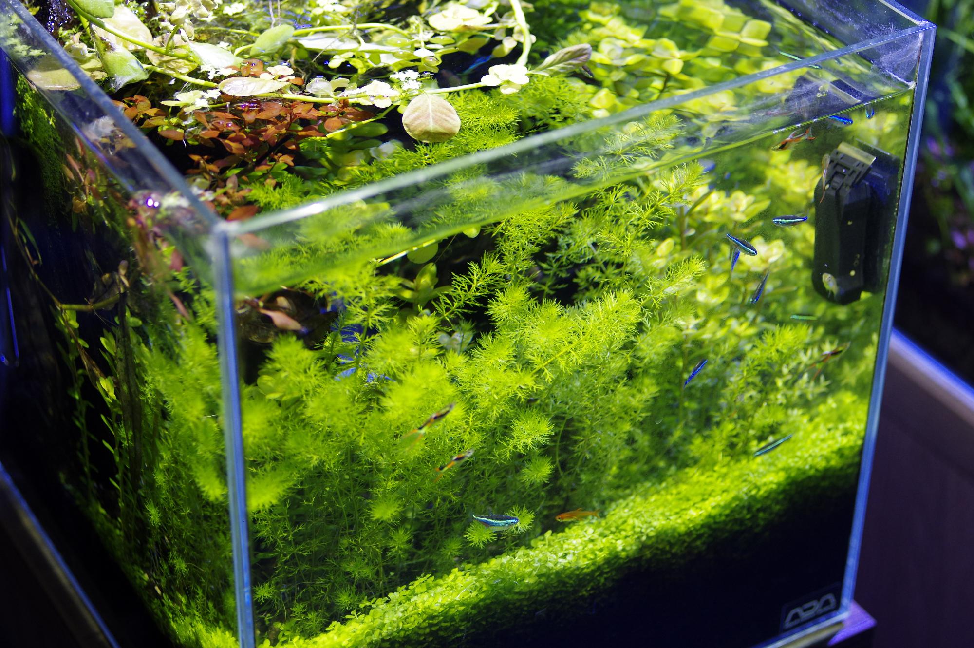 Planted-Aquarium-ADA