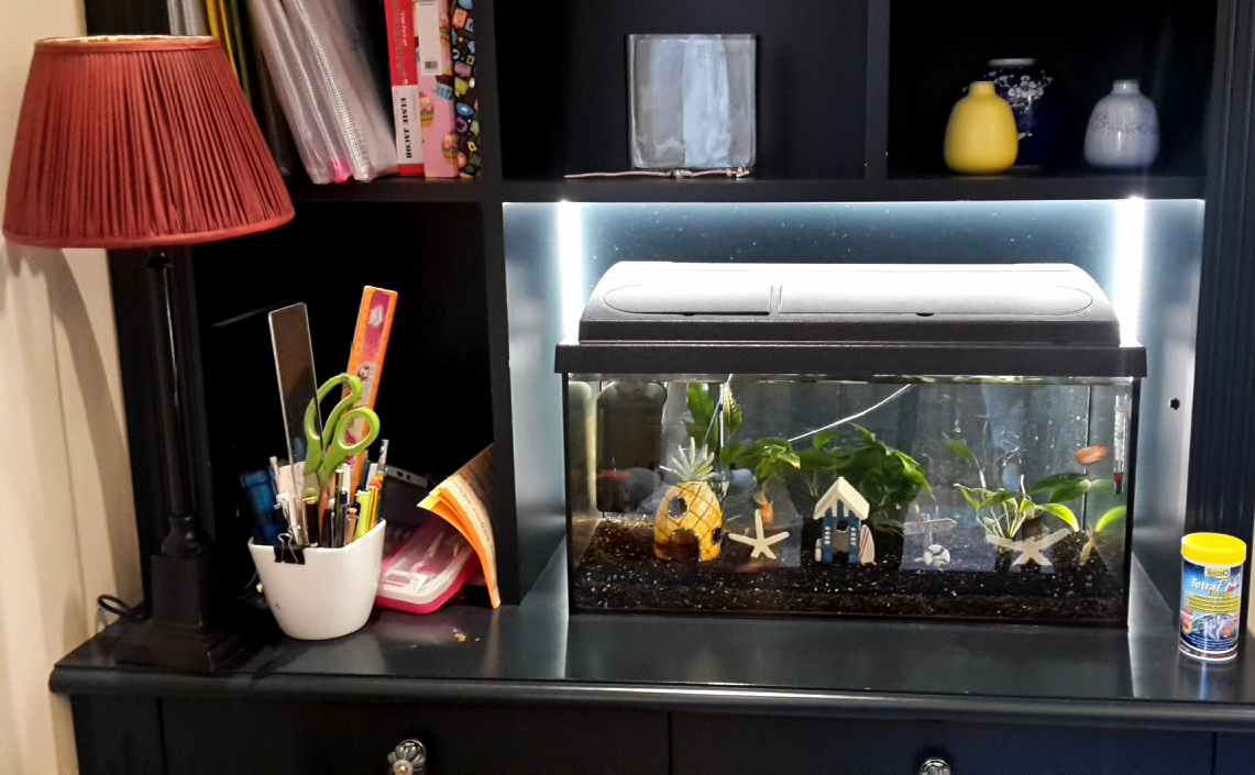 Small Desk Top Aqurium