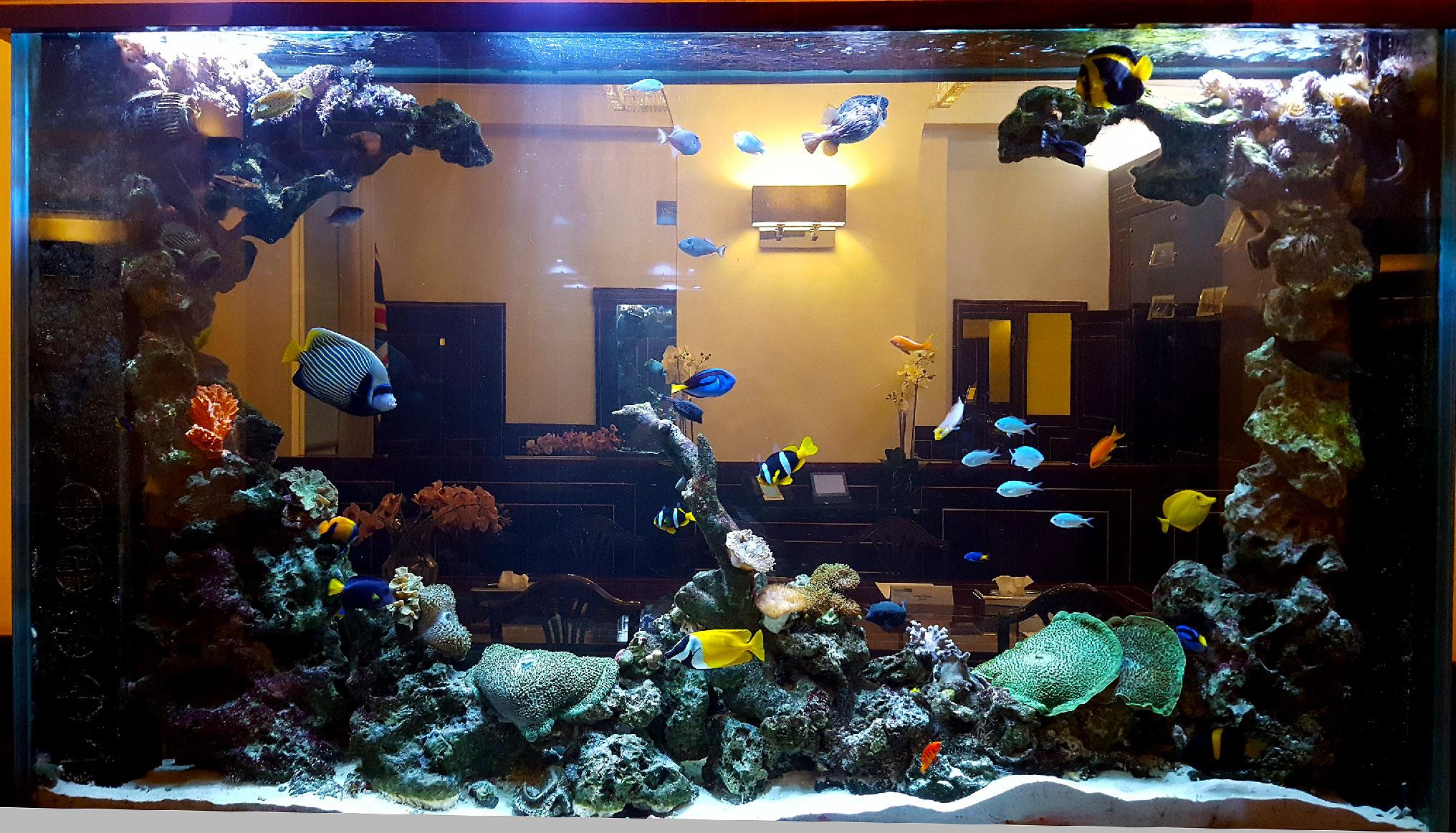 Wall Aquarium Feature