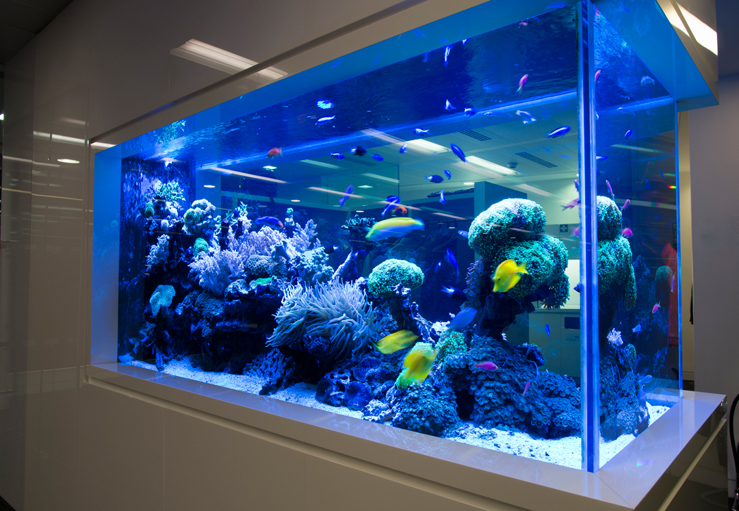 ADC-Bespoke-Aquariums-3722