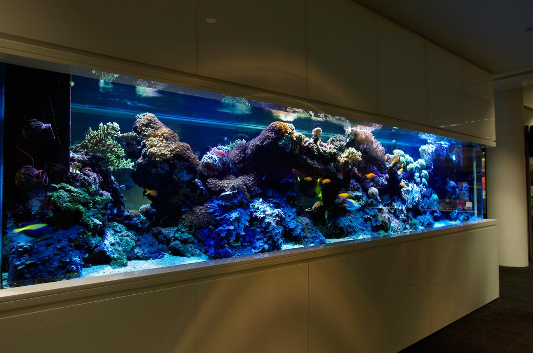 ADC-Marine-Aquarium-3988