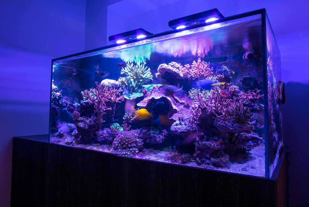 ADC-Reef-Tank-185