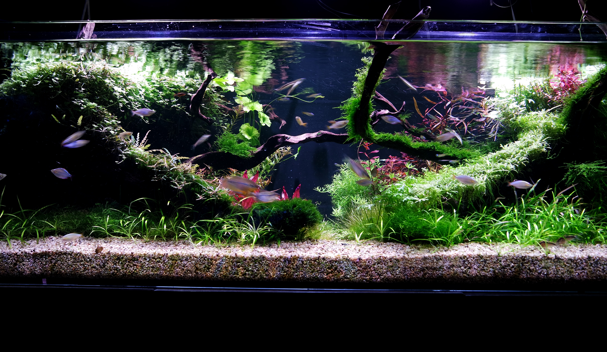 Aquascaper-tank-showroom-03