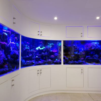 Bespoke Curved Glass Aquarium