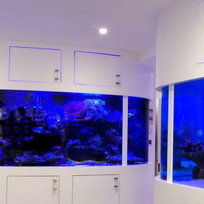 Wall Featured Aquarium