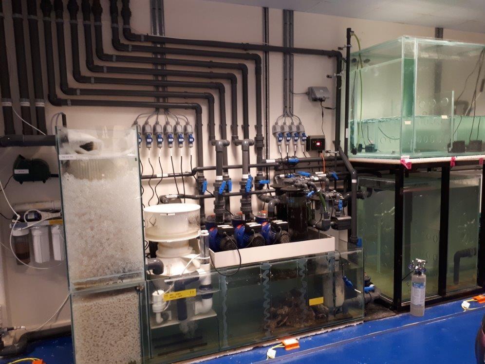 Large Filtration Works