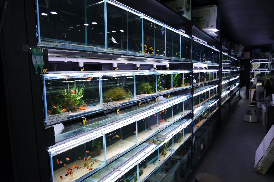 aquatic-design-centre-shop-001