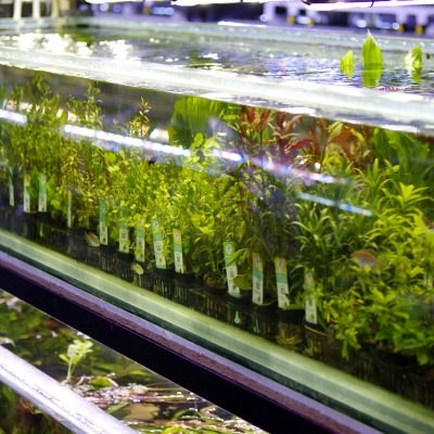 Aquatic Plants Stock