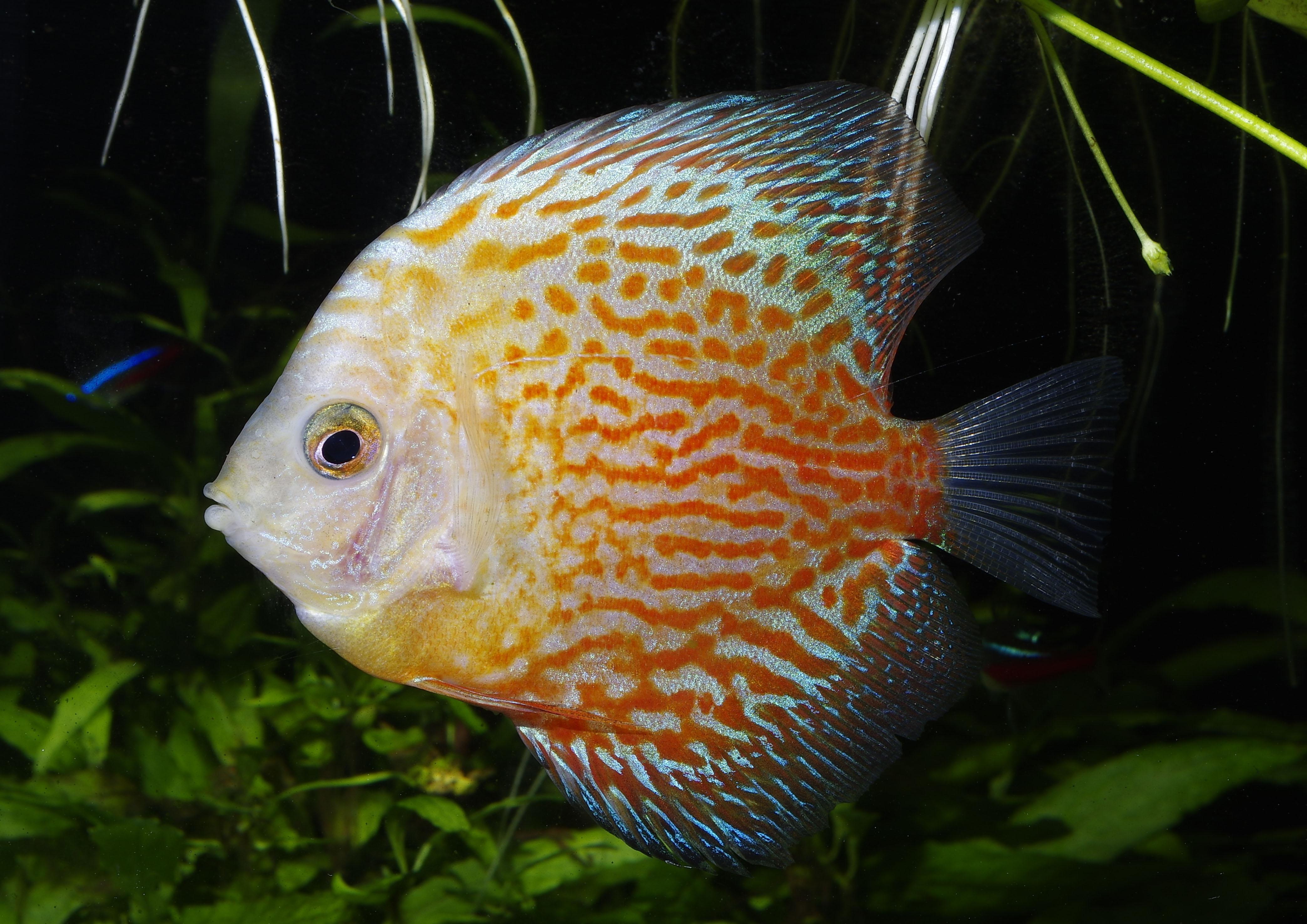Aquarium Plants Pdf