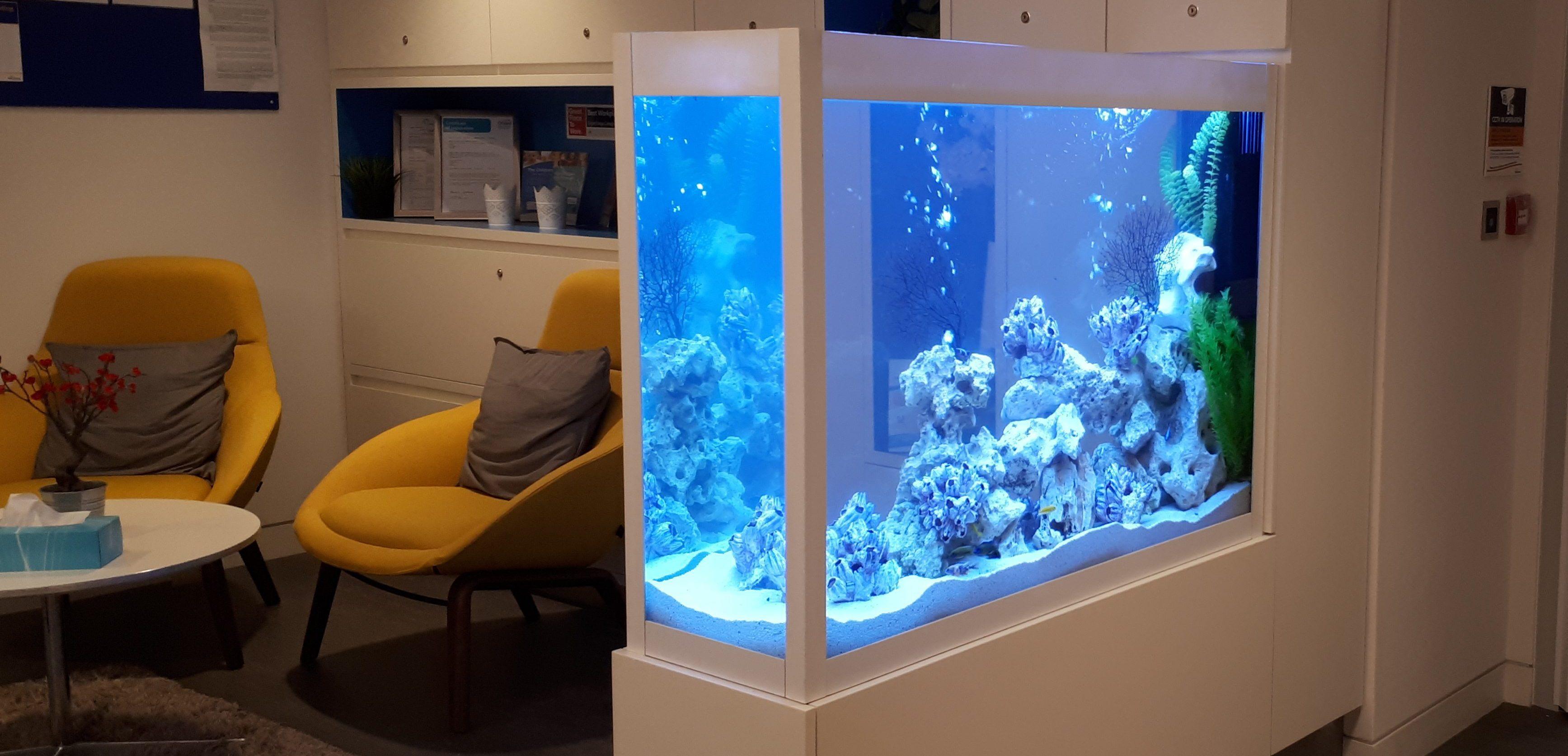 Aquarium Design Services