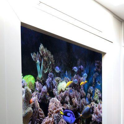 Marine Insert Aquarium Display