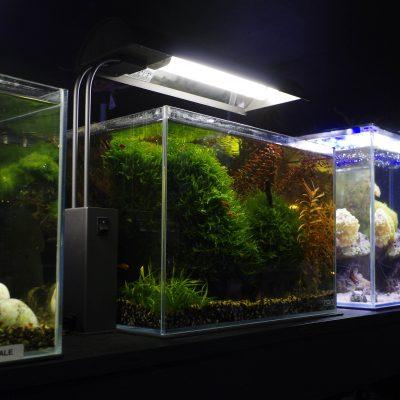 Show Room Nano Aquariums
