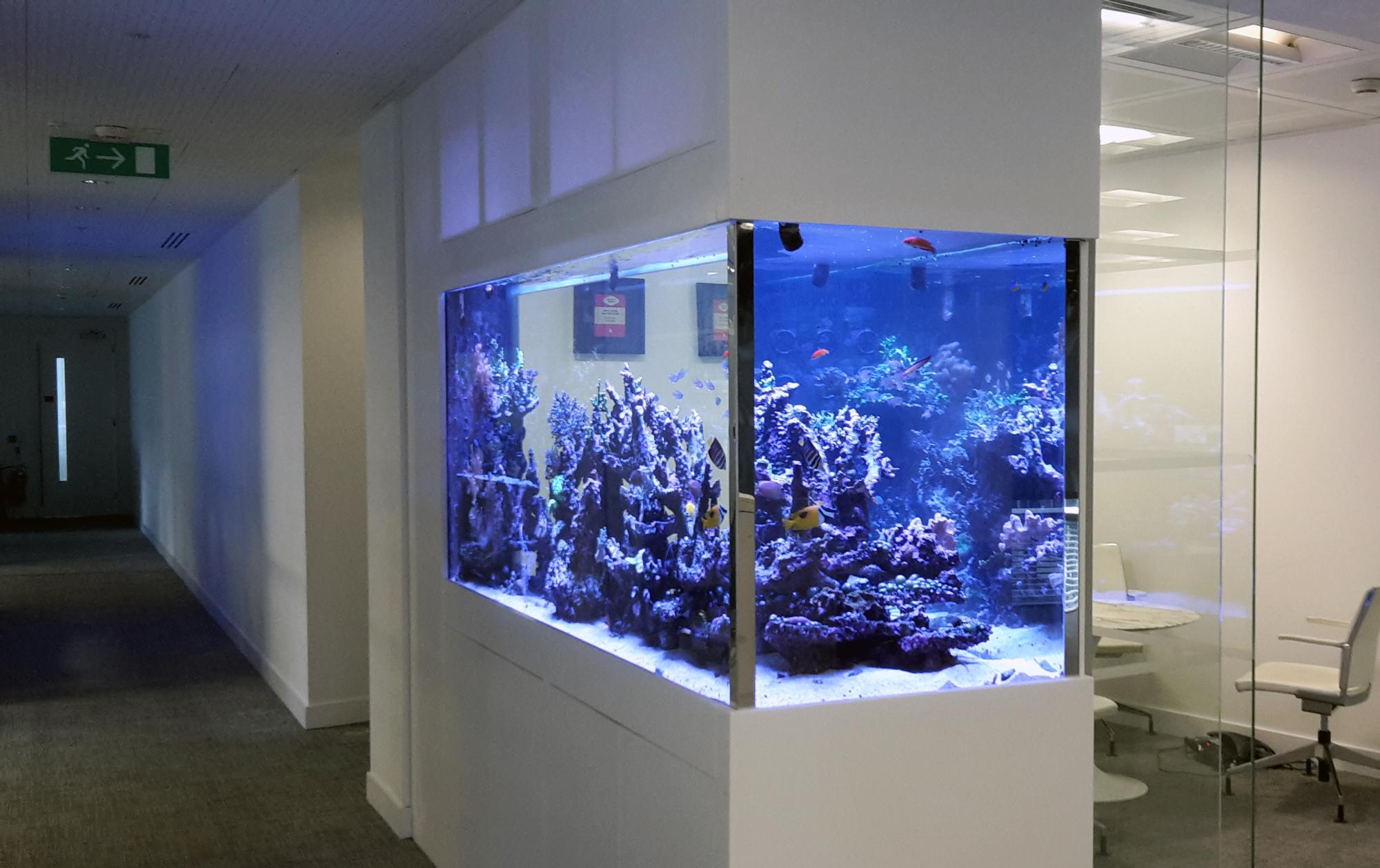 Free-Standing-Aquarium-Reef
