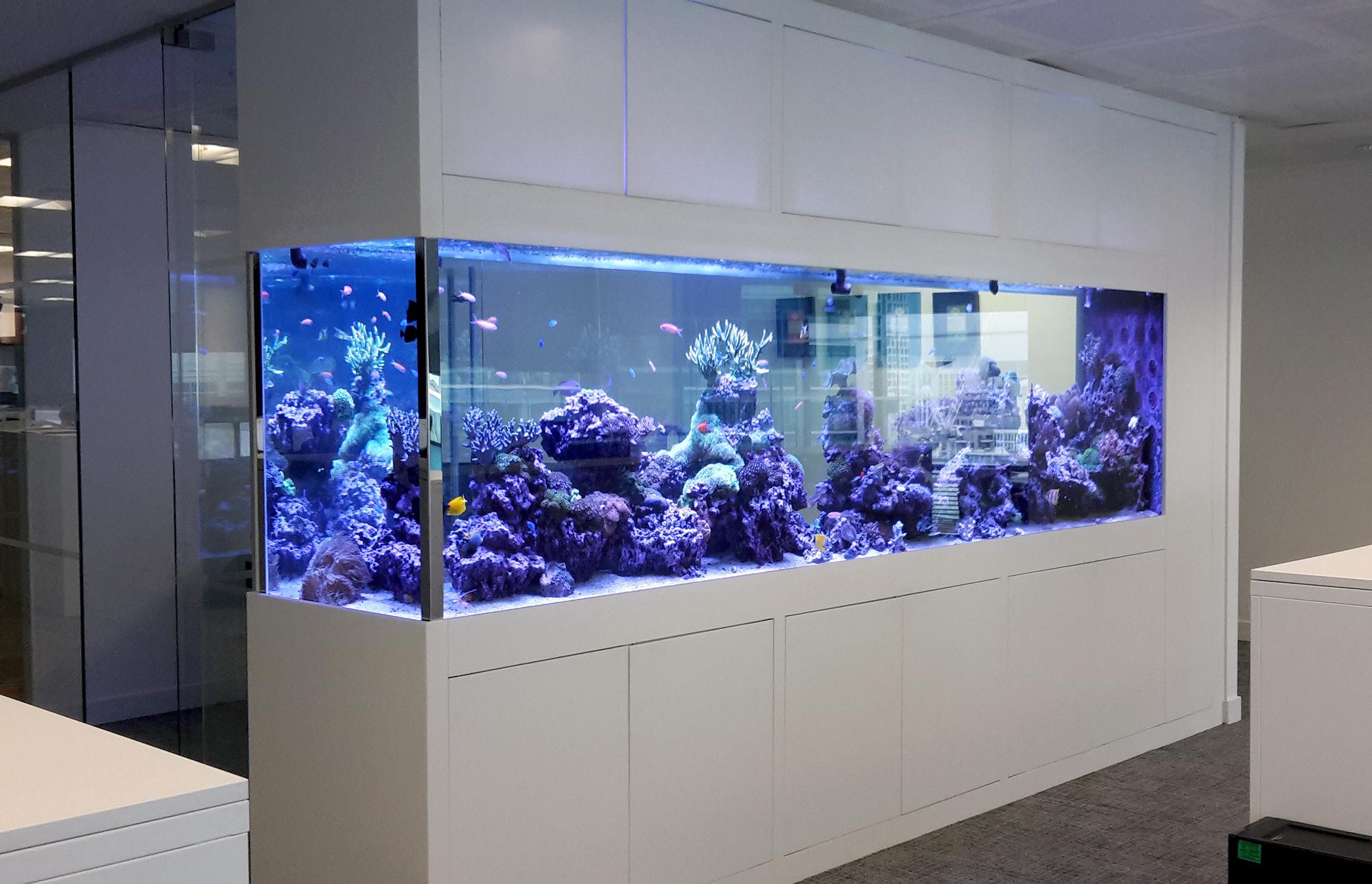 Free-Standing-Aquarium